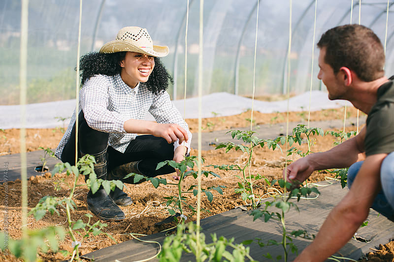 Smiling couple gardening organic vegetables in a greenhouse. by BONNINSTUDIO for Stocksy United