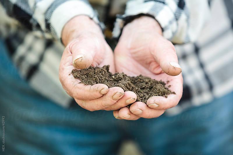 Senior man holding handful of soil by HEX. for Stocksy United