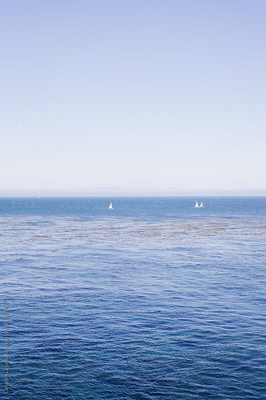 Three sailboats floating in the Monterey bay by Carolyn Lagattuta for Stocksy United