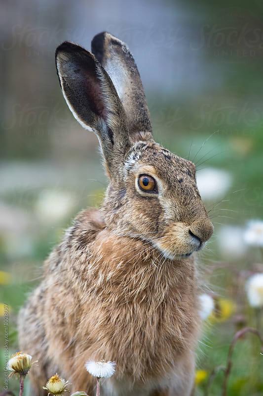 Rabbit by Gabriel Ozon for Stocksy United