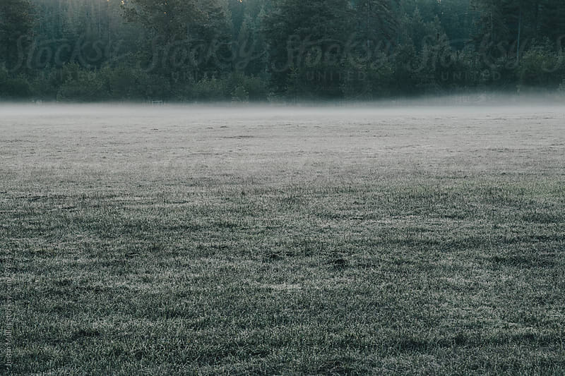 Dew on an empty field at dawn.  by Justin Mullet for Stocksy United