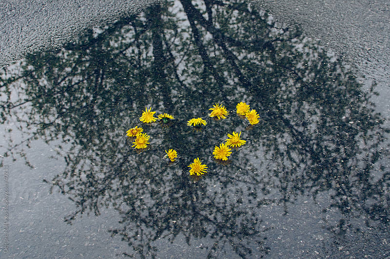 Heart of dandelions in a puddle with a reflection by Deirdre Malfatto for Stocksy United