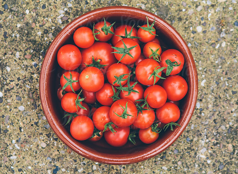 Bowl of freshly picked tomatoes by kkgas for Stocksy United