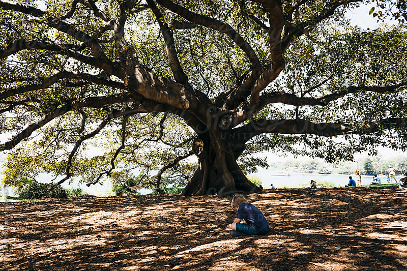 Little boy sitting under big tree shadows  in park by Trent Lanz for Stocksy United