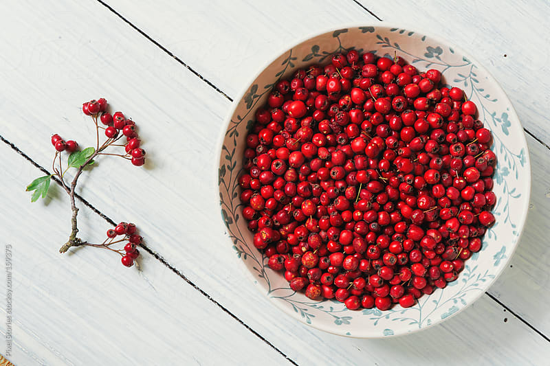 Red hawthorn berries by Pixel Stories for Stocksy United