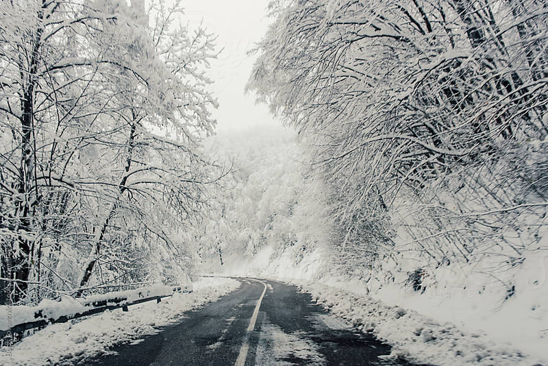Forest road covered with snow by Boris Jovanovic for Stocksy United