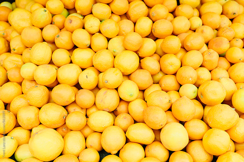 Farmers market pile of fresh organic lemons by Trent Lanz for Stocksy United