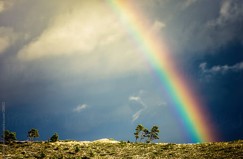 Rainbow on the Horizon with Trees by Helen Sotiriadis for Stocksy United