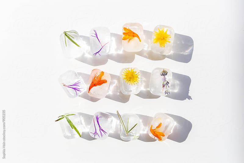 frozen flower ice cubes on white by Sophia Hsin for Stocksy United