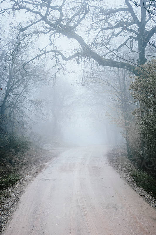 Road in the foggy forest by Simone Becchetti for Stocksy United