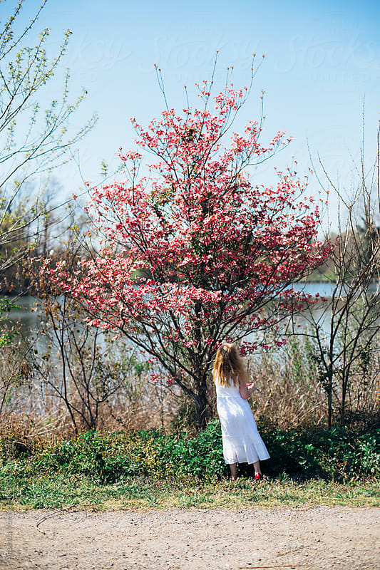 Girl in White Dress by a Cherry Blossom Tree by Amanda Voelker for Stocksy United
