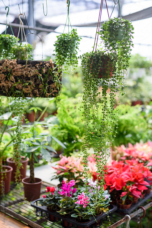 Various plant and flower in greenhouse by Lawren Lu for Stocksy United