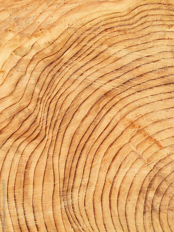 Close up cross section of cut evergreen tree, focus on tree rings by Paul Edmondson for Stocksy United