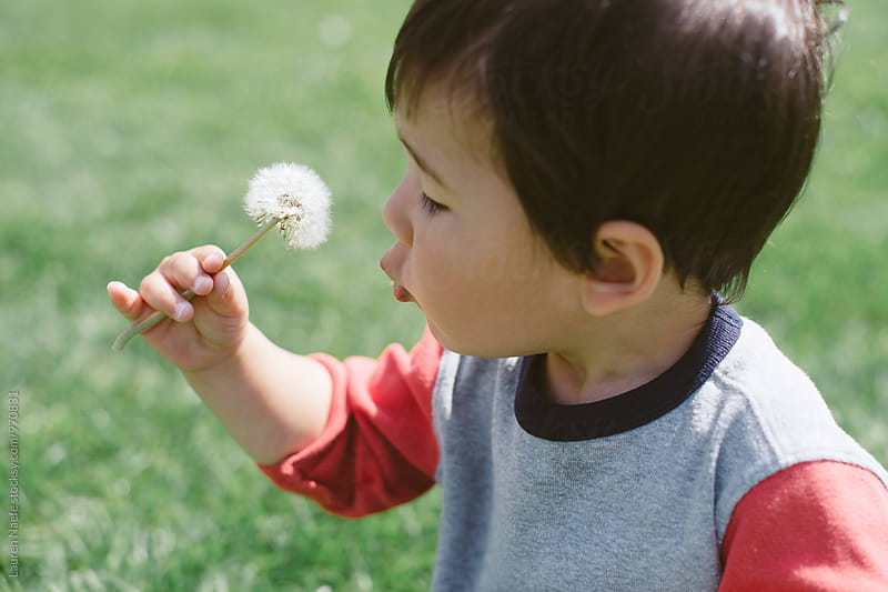 Toddler boy blowing dandelion by Lauren Naefe for Stocksy United