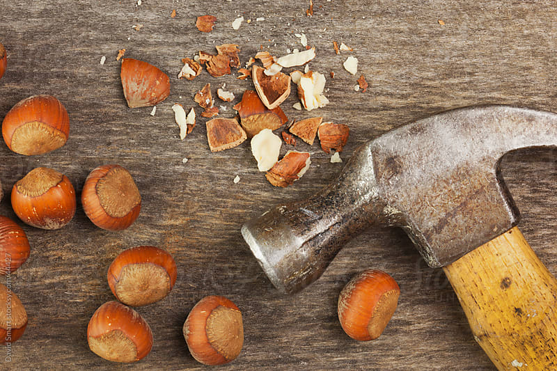 Hazelnuts on weathered wood with a claw hammer by David Smart for Stocksy United