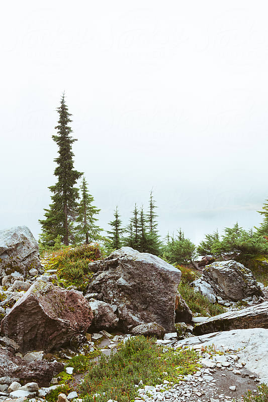 Subalpine Fir Trees And Boulders Set In By Thick Fog by Luke Mattson for Stocksy United