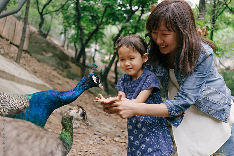 Mother and daughter feeding peacocks with hand by Maa Hoo for Stocksy United