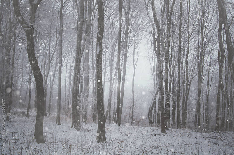 Winter with snow flakes falling in forest by Cosma Andrei for Stocksy United