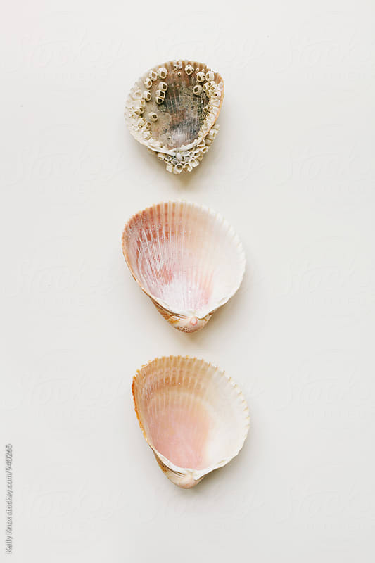 three cockle shells in a line on white by Kelly Knox for Stocksy United