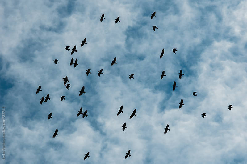 birds flying in the sky by Javier Pardina for Stocksy United