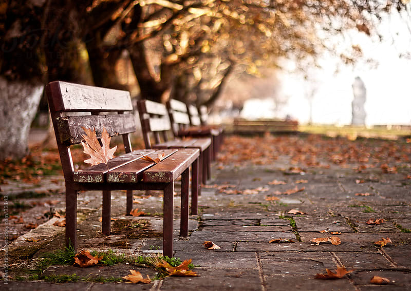 Park bench in the fall by Helen Sotiriadis for Stocksy United