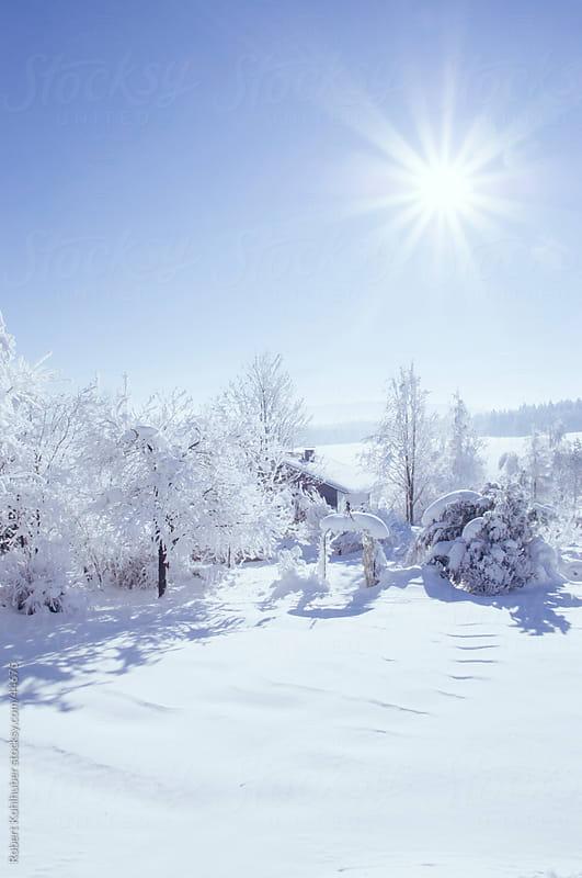 Winter landscape by Robert Kohlhuber for Stocksy United