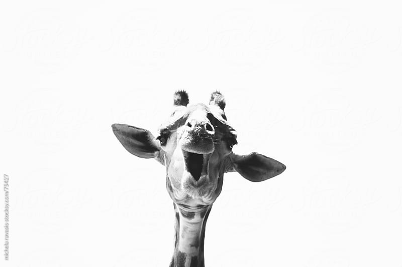 Giraffe by michela ravasio for Stocksy United