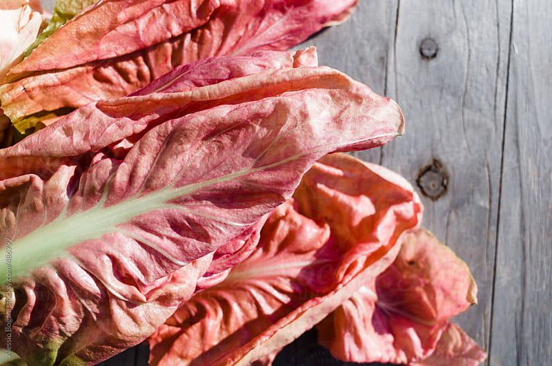 Pink radicchio by Alessio Bogani for Stocksy United