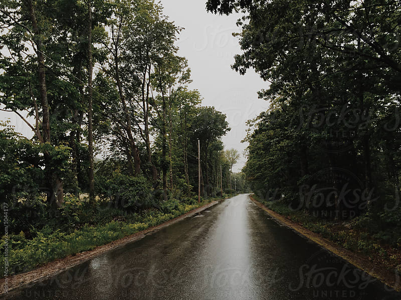 Rainy Road Lined by Trees by Sidney Morgan for Stocksy United