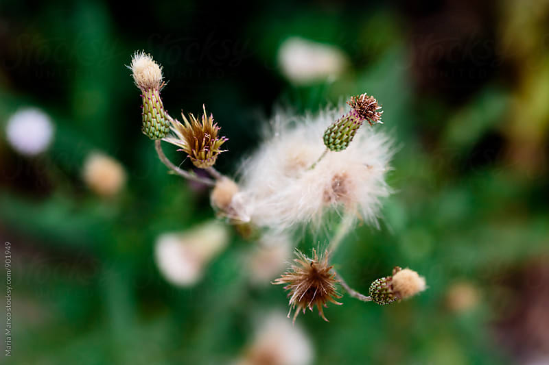 Weeds in yard by Maria Manco for Stocksy United