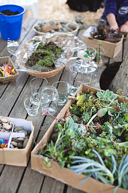 learning to make terrariums at the local fete / market by Natalie JEFFCOTT for Stocksy United