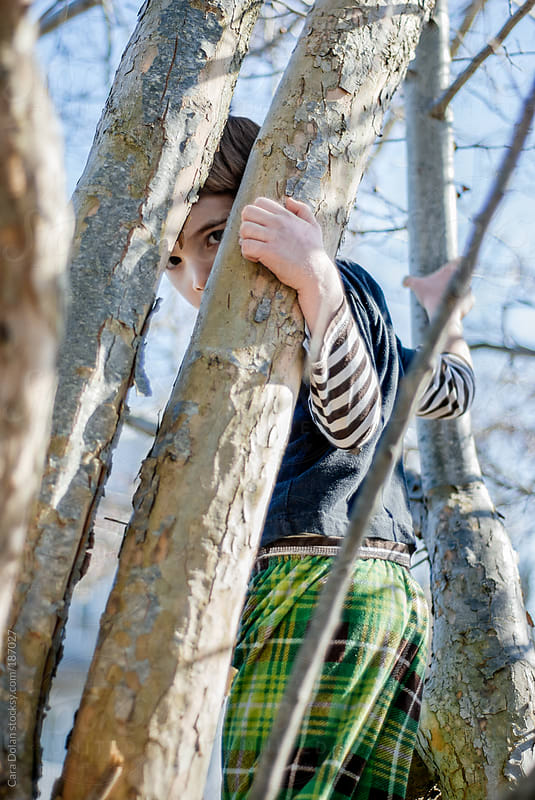 Boy peeks through branches while climbing a tree  by Cara Dolan for Stocksy United