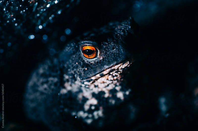 Forest toad hidden in shadows by Cosma Andrei for Stocksy United