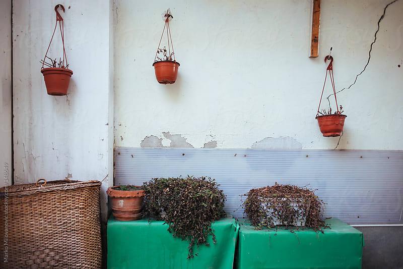 Hanging pots, plants by Marko Milovanović for Stocksy United
