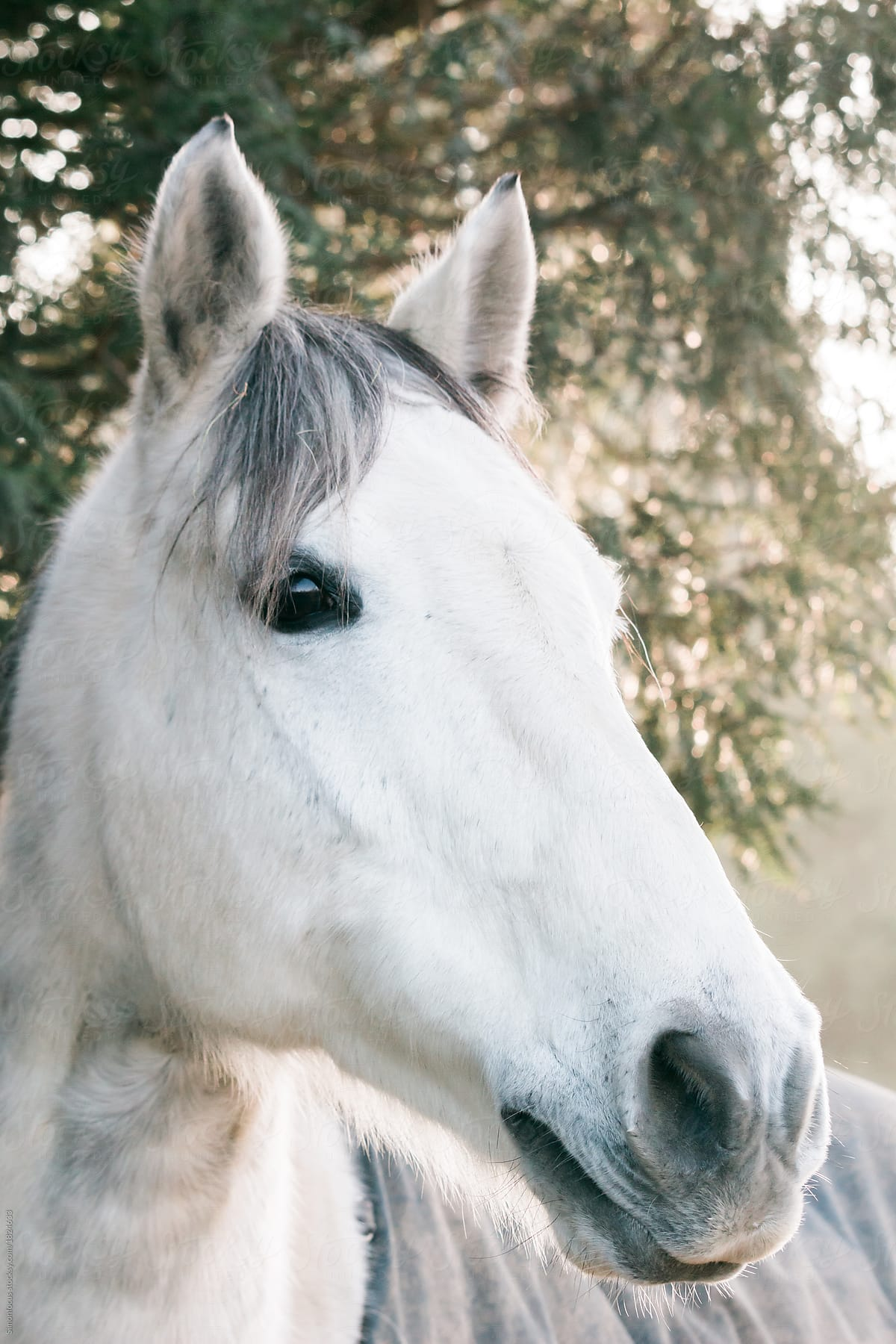White horses head