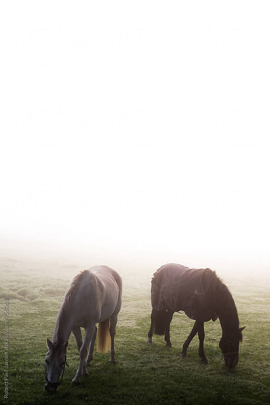 Horses in mist by Robert-Paul Jansen for Stocksy United