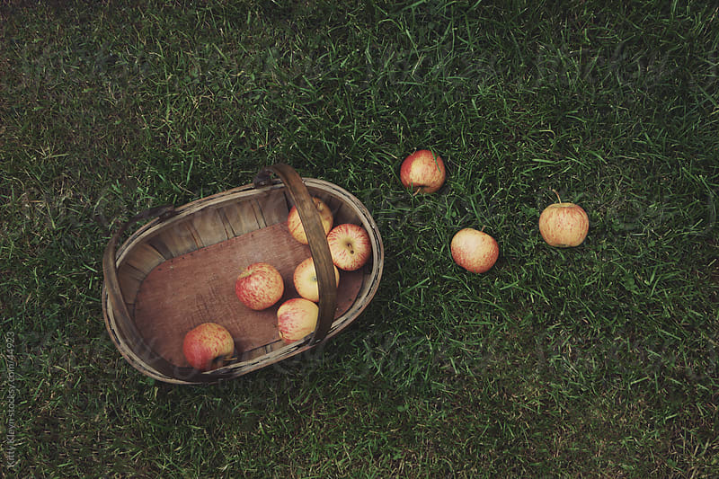 Apple picking by Kitty Gallannaugh for Stocksy United
