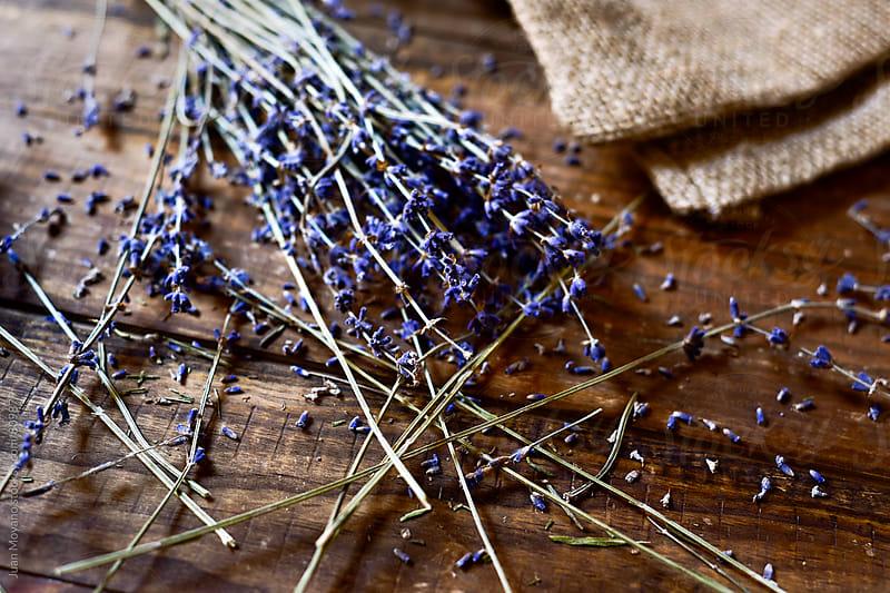 lavender by Juan Moyano for Stocksy United