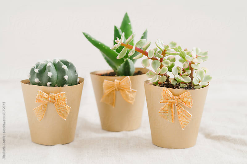 Mini succulents in golden handmade paper flower pot by Elisabeth Coelfen for Stocksy United