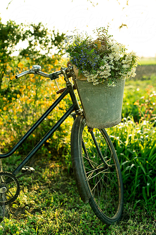 Retro bicycle with bucket full of flowers by Studio Firma for Stocksy United