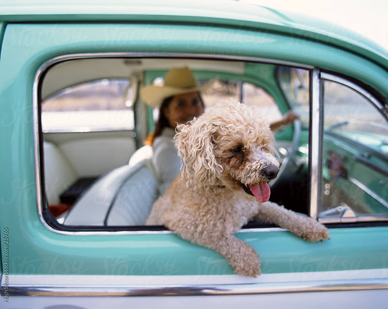 Dog leaning out of car. Mexico by Hugh Sitton for Stocksy United