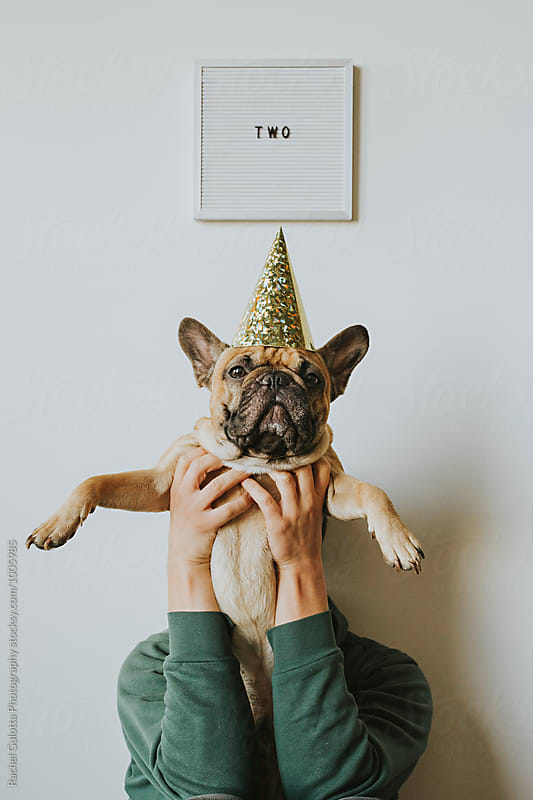 Second Birthday - Letters Spell Two and French Bulldog Puppy in a Party Hat by Rachel Gulotta Photography for Stocksy United