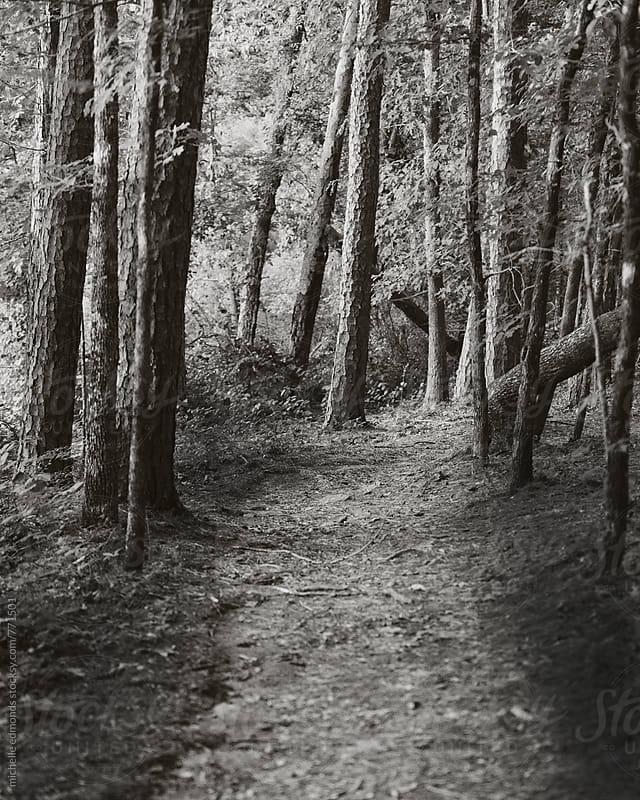black and white trail through woods by michelle edmonds for Stocksy United