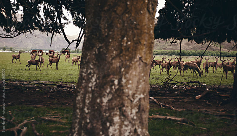 Deer around the trees by Sam Hurd Photography for Stocksy United