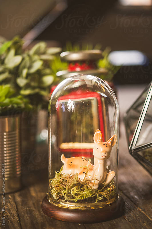 a deer in a glas jar by Sam Hurd Photography for Stocksy United