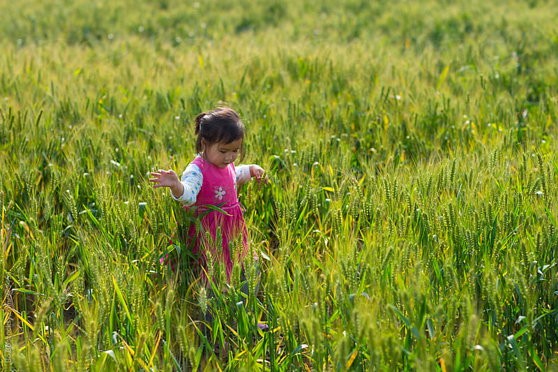 lovely little asian girl outdoor in the wheat field by cuiyan Liu for Stocksy United