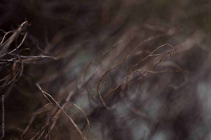 Desolation: macro catch of bare plant's twigs by Laura Stolfi for Stocksy United