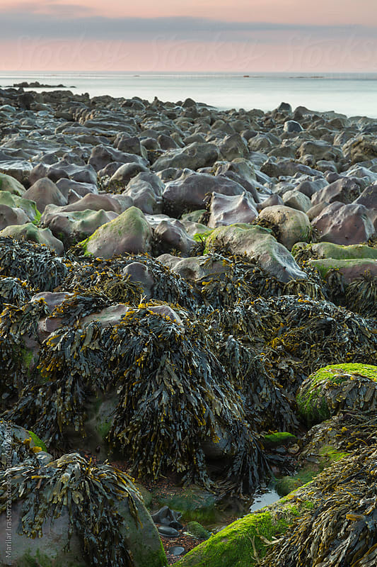 Seaweed on a stony beach by Marilar Irastorza for Stocksy United