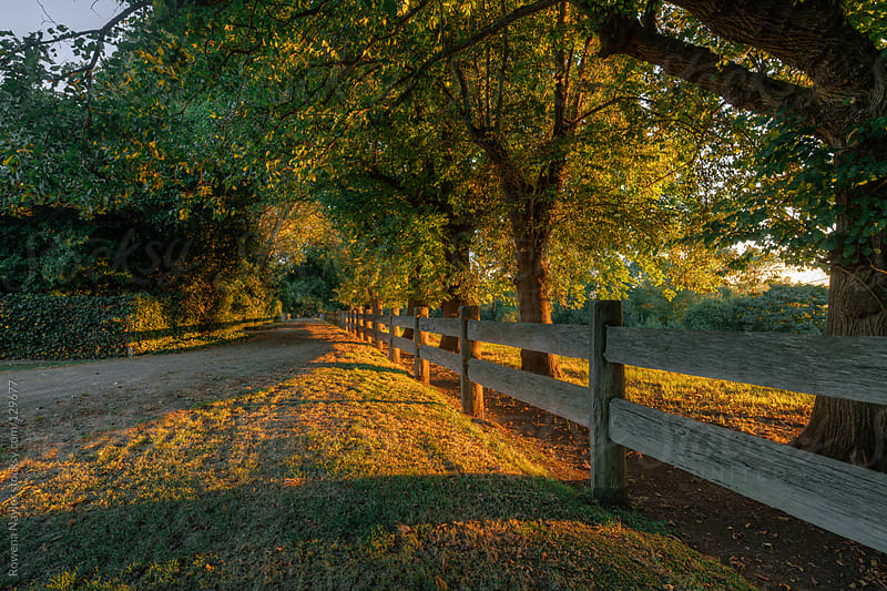 Oak Tree Lined Entrance to a Country Homestead by Rowena Naylor for Stocksy United