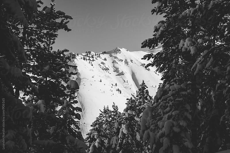 view through a forest to snowcovered mountain landscape, east anatolia, turkey - black and white by Leander Nardin for Stocksy United